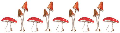 illustration-champignon.jpg