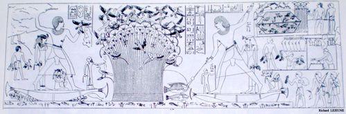 Cailliaud---Tombe-Neferhotep-1.jpg