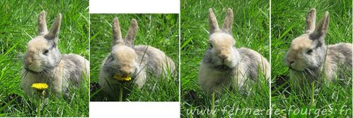 lapin-fourges.jpg