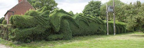 dragon-shaped-hedge-topiary-john-brooker-4.jpg