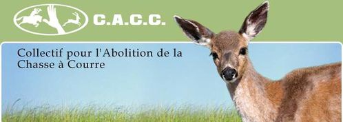 societe civile chasse a courre header acceuil