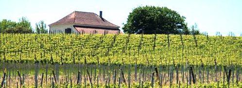 Les vignes de Sarragachies