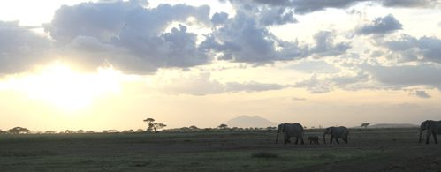 Tembo-at-sunset.JPG