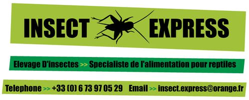 insect-express2-copie-1.jpg