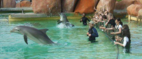 billet marineland rencontre avec les dauphins