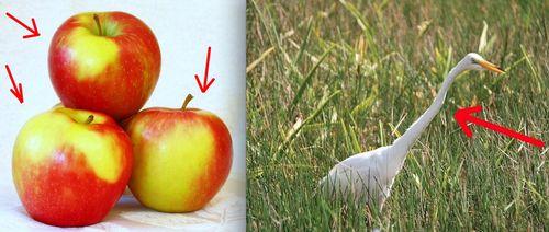 oiseau-long-cou-fin-pommes-trois-calendrier-avent-2012-5-de