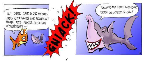 Requins-5.jpg