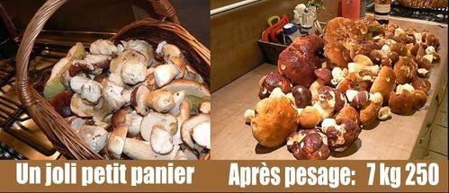 cueillette-de-champignons.jpg