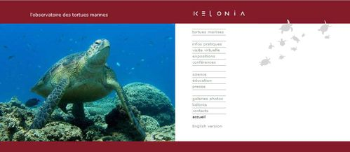 page acceuil site kelonia