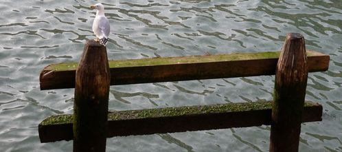 venise-mouette-seagull-canal.JPG