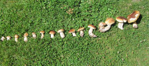 champignons 1