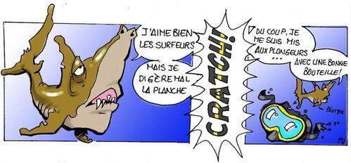 Requin-Plongeur.jpg