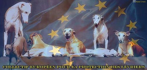 collectif-europeen-protection-levriers-frederique-500.jpg