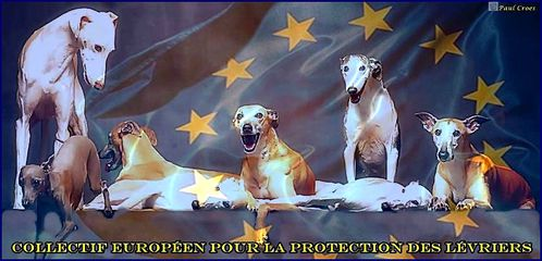 a-collectif-europeen-protection-levriers-frederique-500-ret.jpg