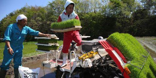 riz-fukushima.jpeg