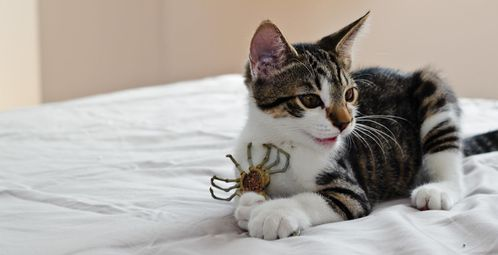 Cat vs Facehugger by albinoeatpod