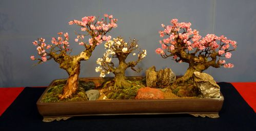 prunier-bonsai-7.jpg