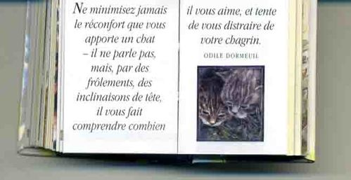 chat réconfortant