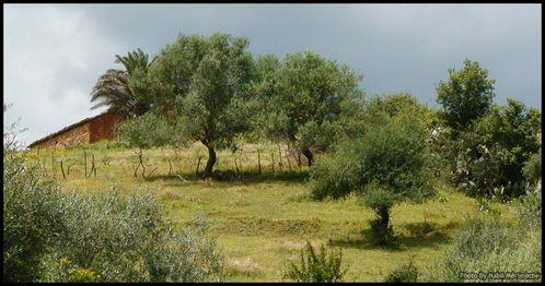 maison-traditionnelle-algerienne-verger-algerie-mediterrane.jpg