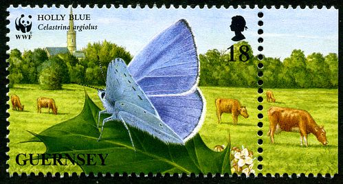 Guernesey87-Holly-Blue.jpg