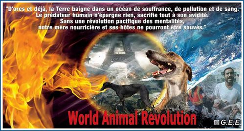 world-animal-revolution-galgos-ethique-europe-ban-fred-orig
