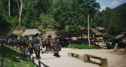 le-village-de Maesa-les elephants-et-leur-cornac