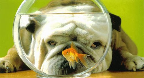 chien-poisson-rouge-humour-animal