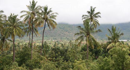 2-village-palmiers.JPG