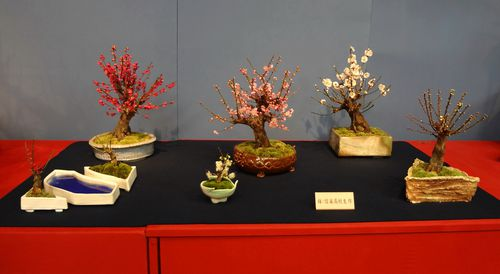 prunier-bonsai-4.jpg
