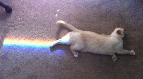 Nyan-Cat.jpeg
