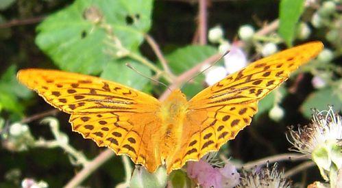 une fleur orange.7