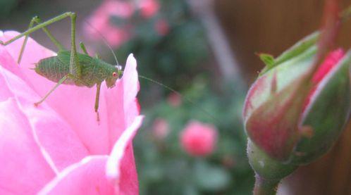 papillons 11