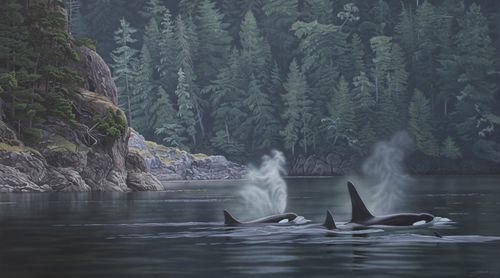 Telegraph-Cove--orcas.jpg