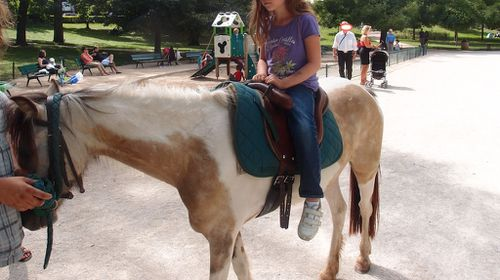 cheval_vincennes.JPG