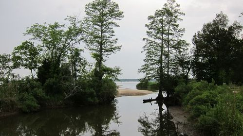 Chippokes Plantation SP (17)