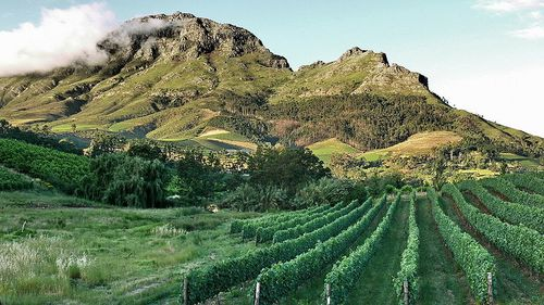 South-Africa-Stellenbosch Vineyards Deon Maritz Wikipedia