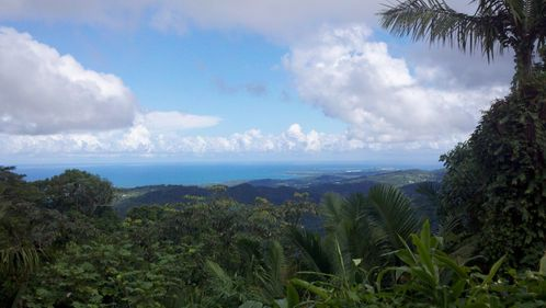 Vue-foret-tropical.jpg