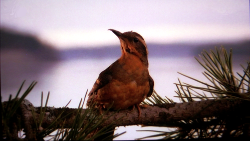 The_Twin_Peaks_Bird_by_pinkythepink.png