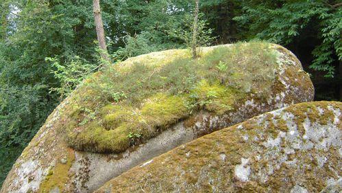 de la pierre, un peu de terre, des arbres.1