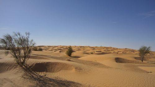 desert Decembre 2010 108