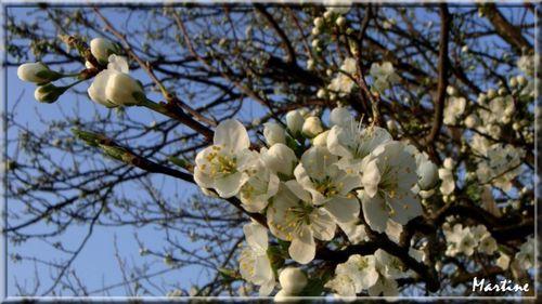 Fleurs de printemps (1)