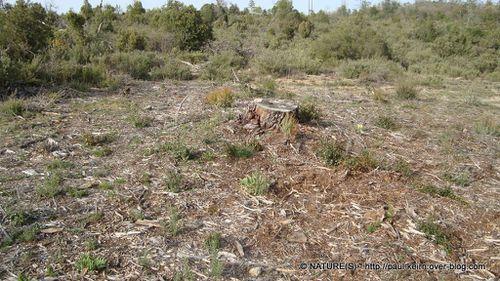 Ou trouver des morilles - natures paul keirn (13)