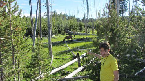 2012-06-24-Yellowstone-wildlife-8761.JPG