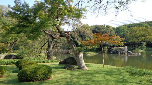 Jardin koishikawa korakuen tokyo addict for Jardin korakuen