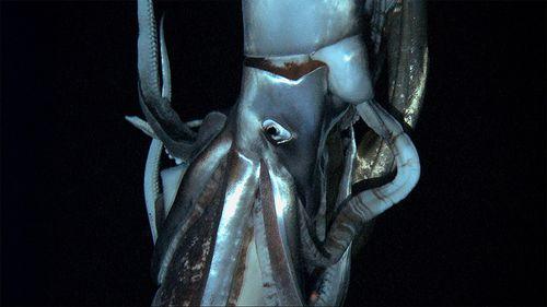 calamar-geant.jpg
