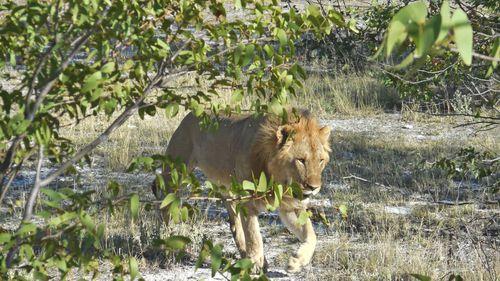 Lions_1239-copy.jpg