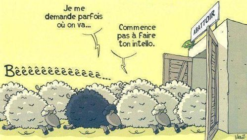 moutons abbattoir