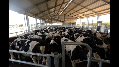 141008-vaches-3.png