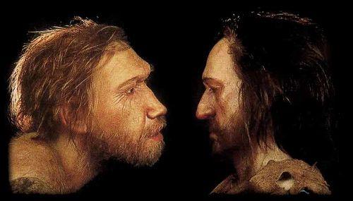 neandertal - sapiens
