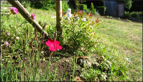 Jardin 1521